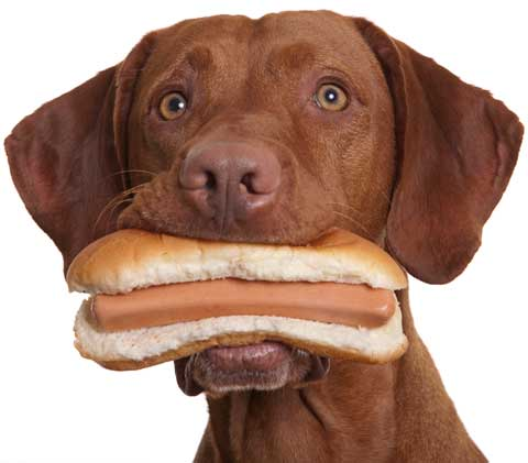 Dog with hotdog in its mouth